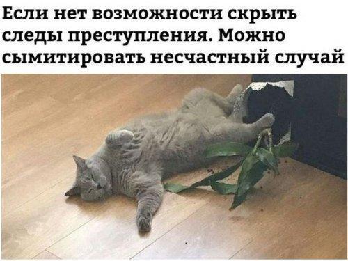 Read more about the article Новые смешные картинки с надписями