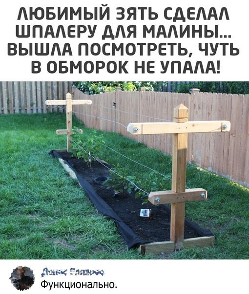 Read more about the article Свежие прикольные картинки с надписями