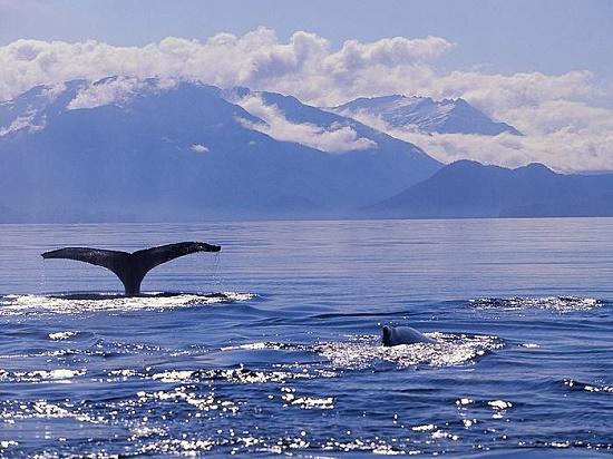 Read more about the article Интересные факты о Беринговом море