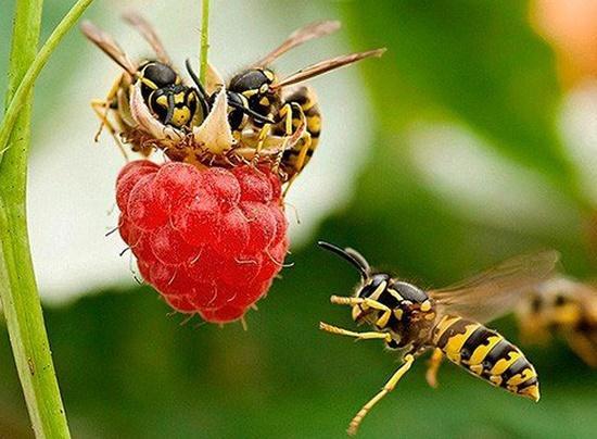 Read more about the article Интересные факты о пчелах