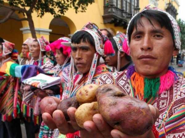 картофель в боливии