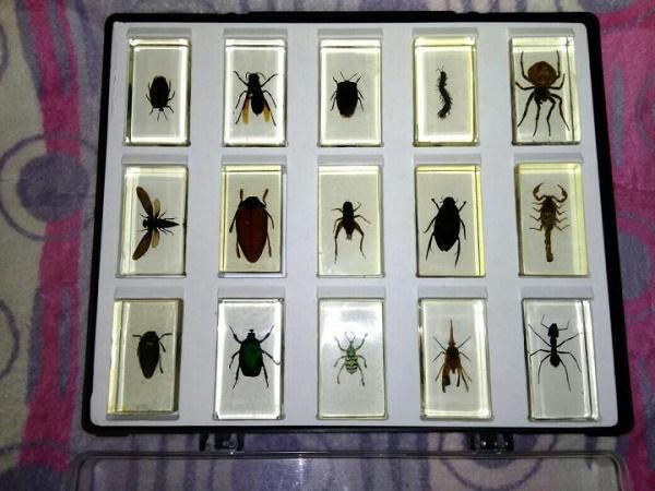крис прэтт и коллекция жуков