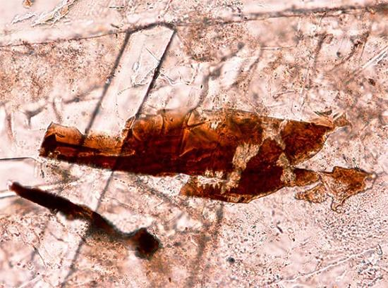 минерал транквиллитит