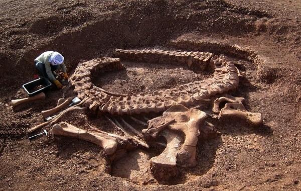огромные кости динозавра
