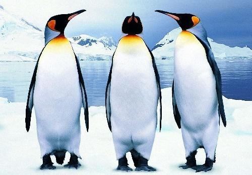 Read more about the article Интересные факты о пингвинах