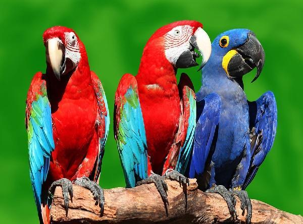 Read more about the article Интересные факты о попугаях