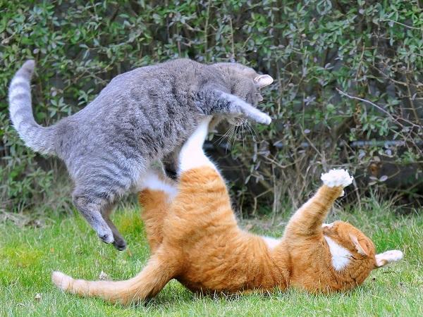смешные истории про котов и кошек