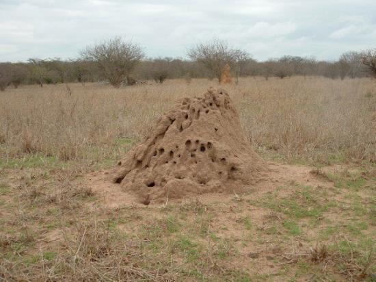 термитники в национальном парке Крюгера