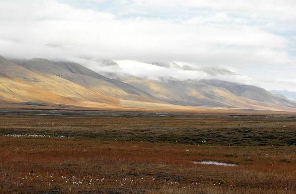 Read more about the article Интересные факты о тундре