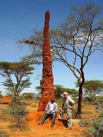 высокий термитник