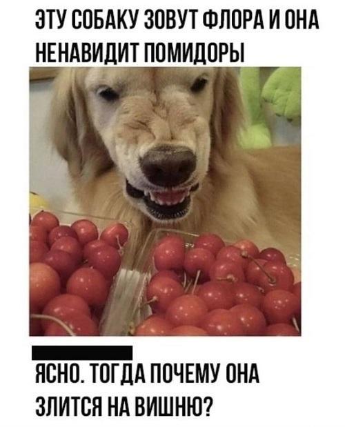 Смешные и улетные картинки с надписями