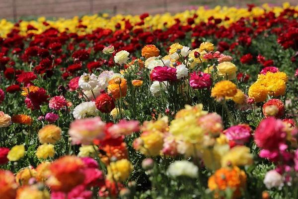 Read more about the article Интересные факты о цветах