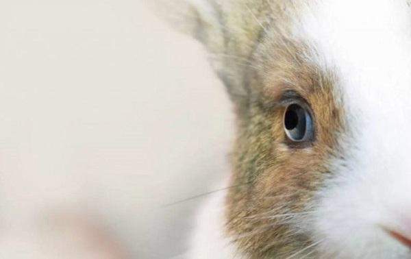 глаза кролика