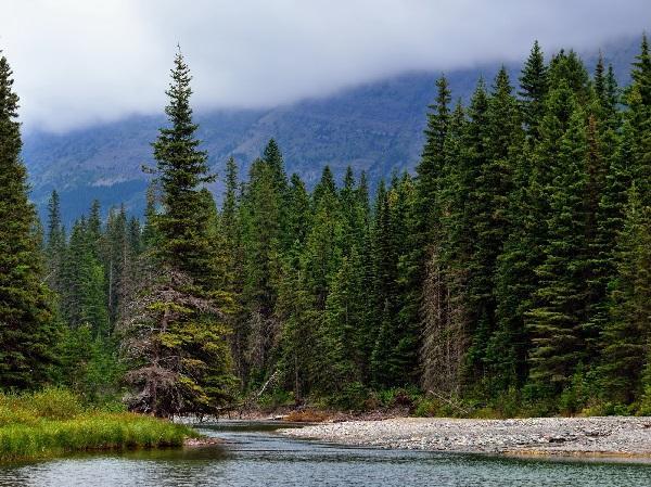 Read more about the article Интересные факты о хвойных лесах