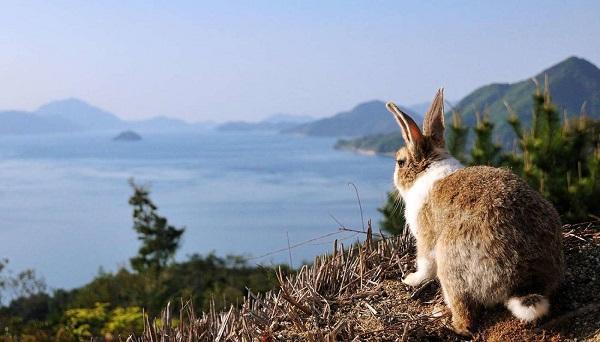 кролики на острове