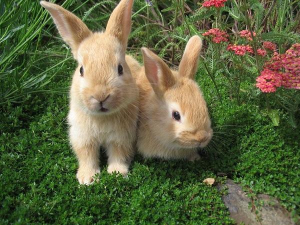 Read more about the article Интересные факты о кроликах