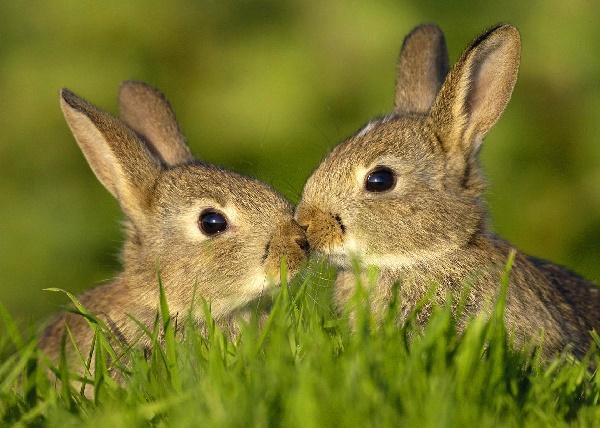 Read more about the article Интересные факты про зайцев
