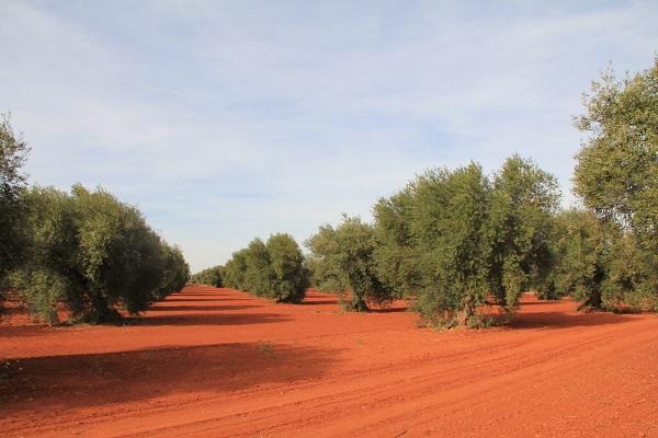 земля в Гвинее ярко-красного цвета